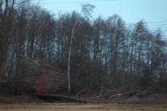 HPIM6046 - 18.01.2007